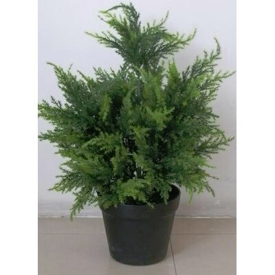 Geko Products Potted Cypress