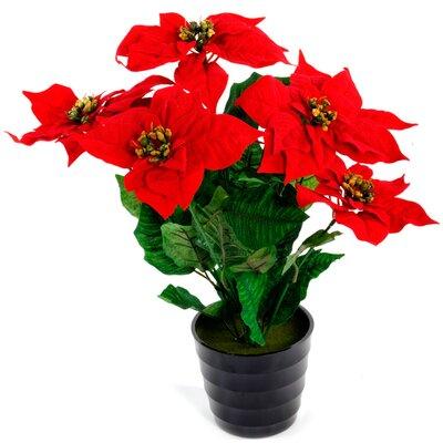 Geko Products Poinsettia Desk Top Plant in Pot