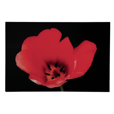 All Home Poppy Graphic Art
