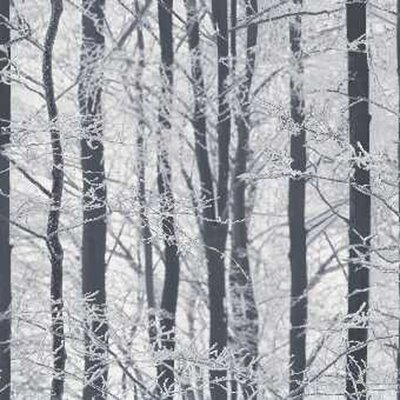 Arthouse Frosted Wood 10.05m L x 53cm W Roll Wallpaper