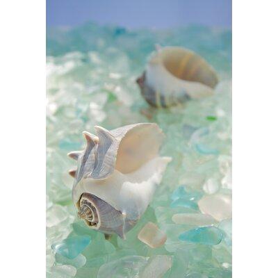 Alan Blaustein Sea Glass with Sea Shells 4 Photographic Print on Canvas