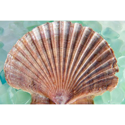 Alan Blaustein Sea Glass with Sea Shells 5 Photographic Print on Canvas