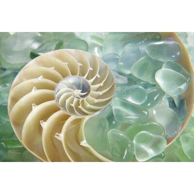 Alan Blaustein Sea Glass with Nautilus 2 Photographic Print on Canvas
