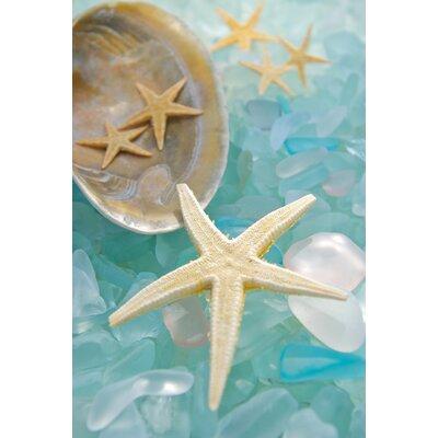 Alan Blaustein Sea Glass with Starfish 5 Photographic Print