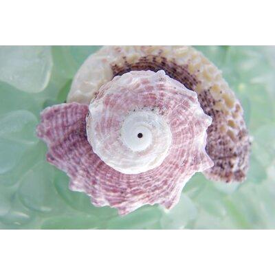 Alan Blaustein Sea Glass with Sea Shells 6 Photographic Print on Canvas