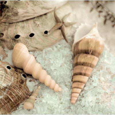 Alan Blaustein La Playa Sea Shells 2 Photographic Print