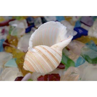 Alan Blaustein Sea Glass with Sea Shells 8 Photographic Print