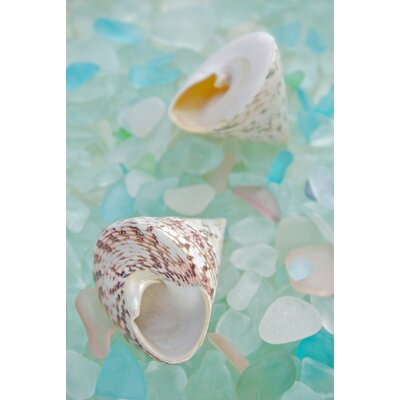 Alan Blaustein Sea Glass with Sea Shells 2 Photographic Print on Canvas