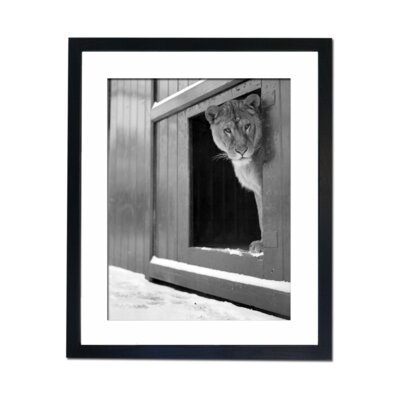 Culture Decor It Looks Too Cold For Me Framed Photographic Print