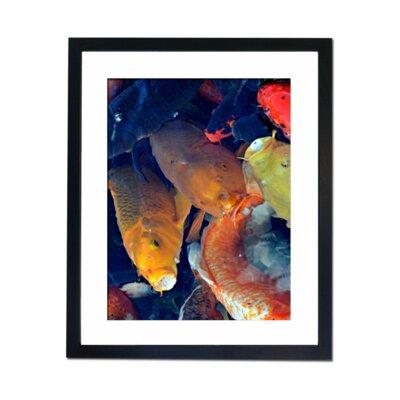 Culture Decor Rainbow Koi Framed Photographic Print