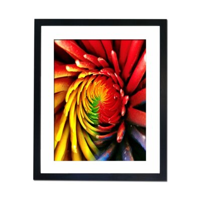 Culture Decor Spiral Flower Framed Photographic Print