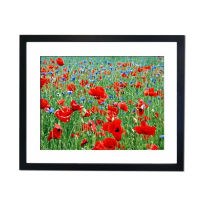 Culture Decor Red and Blue Framed Photographic Print