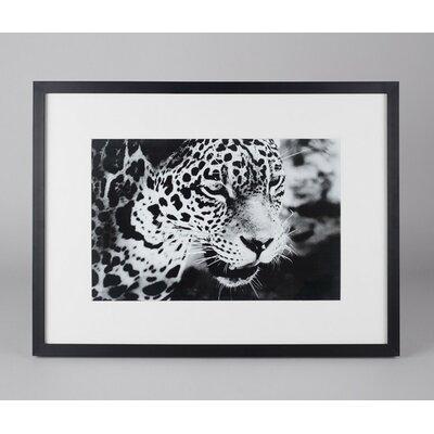 Amaris Elements Gerahmtes Wandbild Panthera