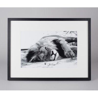Amaris Elements Gerahmtes Foto Löwe in der Savanne