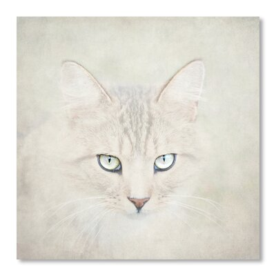 Americanflat Cat by Lina Kremsdorf Photographic Print in White