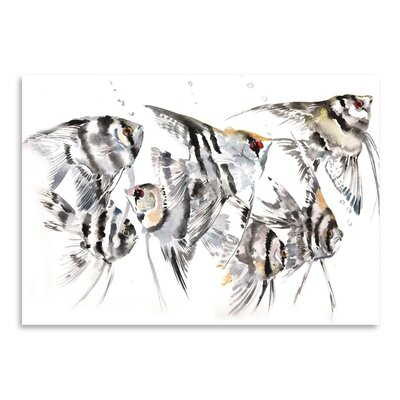 Americanflat Angelfish Art Print