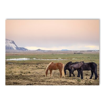 Americanflat Horse 2 Photographic Print