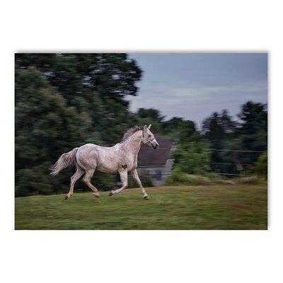 Americanflat Running Horse Photographic Print