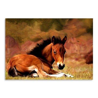 Americanflat Resting Foal Art Print