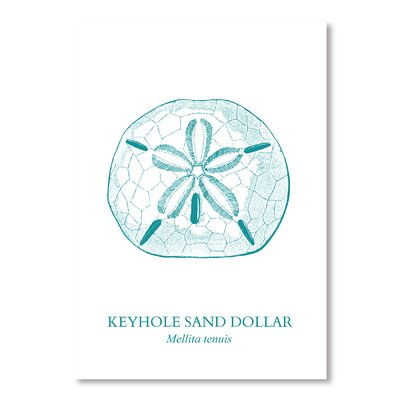 Americanflat Sand Dollar Graphic Art Wrapped on Canvas
