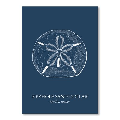 Americanflat Sand Dollar Sea Graphic Art on Canvas