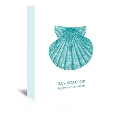 Americanflat Bay Scallop Graphic Art Wrapped on Canvas