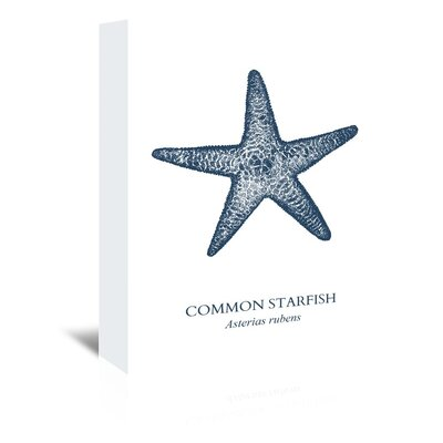 Americanflat Common Starfish Graphic Art Wrapped on Canvas