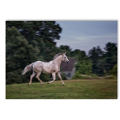 Americanflat Running Horse Photographic Print Wrapped on Canvas