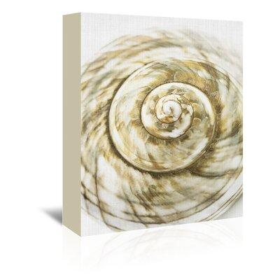 Americanflat 'Sea Shell' by Lila and Lola Graphic Art Wrapped on Canvas