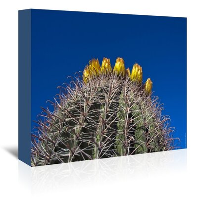 Americanflat 'Barrel Cactus' by Murray Bolesta Photographic Print Wrapped on Canvas