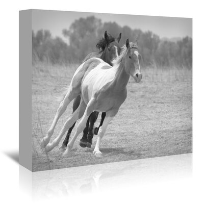 Americanflat 'Playful Pals 6 Black White' by Murray Bolesta Photographic Print Wrapped on Canvas