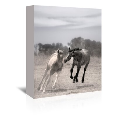 Americanflat 'Playful Pals 4' by Murray Bolesta Photographic Print Wrapped on Canvas