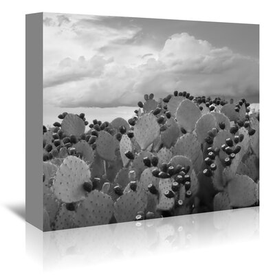 Americanflat 'Prickly Pear Tuna 2' by Murray Bolesta Photographic Print Wrapped on Canvas