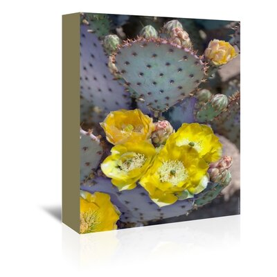 Americanflat 'Purple Prickly Pear Cactus Blossoms' by Murray Bolesta Photographic Print Wrapped on Canvas