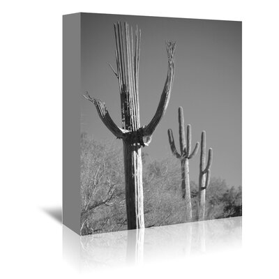 Americanflat 'Spent Saguaro 11' by Murray Bolesta Photographic Print Wrapped on Canvas