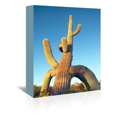 Americanflat 'Tripod Saguaro 5' by Murray Bolesta Photographic Print Wrapped on Canvas
