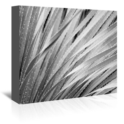 Americanflat 'Agave Abstract 3' by Murray Bolesta Graphic Art Wrapped on Canvas