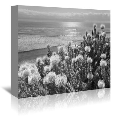 Americanflat 'Protea and Pacific' by Murray Bolesta Photographic Print Wrapped on Canvas