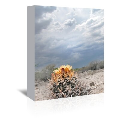 Americanflat 'Lonely Cactus Blossom' by Murray Bolesta Photographic Print Wrapped on Canvas