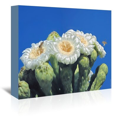 Americanflat 'Bees and Saguaro Blossom' by Murray Bolesta Photographic Print Wrapped on Canvas