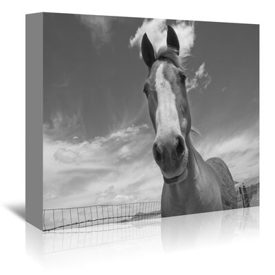 Americanflat 'Playful Pal 1' by Murray Bolesta Photographic Print Wrapped on Canvas