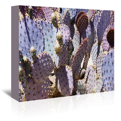 Americanflat 'Mess O'Cactus 2' by Murray Bolesta Photographic Print Wrapped on Canvas