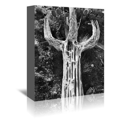 Americanflat 'Spent Saguaro 2' by Murray Bolesta Photographic Print Wrapped on Canvas