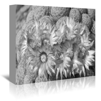 Americanflat 'Pincushion 7' by Murray Bolesta Photographic Print Wrapped on Canvas