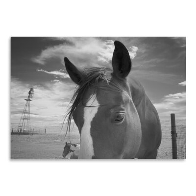 Americanflat 'Playful Pals 8' by Murray Bolesta Photographic Print