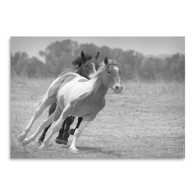 Americanflat 'Playful Pals 6' by Murray Bolesta Photographic Print