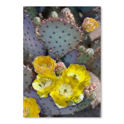 Americanflat 'Prickly Pear Cactus Blossoms' by Murray Bolesta Photographic Print