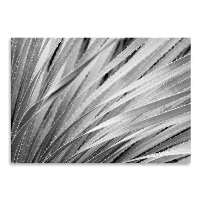 Americanflat 'Agave Abstract 3' by Murray Bolesta Graphic Art