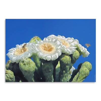 Americanflat 'Bees and Saguaro Blossom' by Murray Bolesta Photographic Print