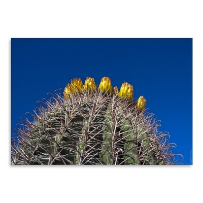 Americanflat 'Barrel Cactus' by Murray Bolesta Photographic Print